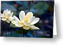 Enchanting Lotus Greeting Card