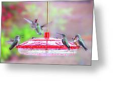 Encounter At The Feeder Greeting Card