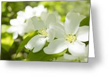 Encyclopedia Of Spring Image Apple Blossom  Greeting Card