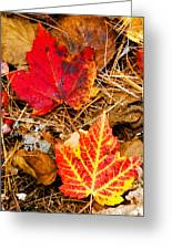 End Of Fall Greeting Card