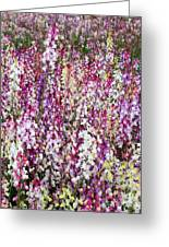Endless Field Of Flowers Greeting Card