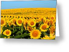 Endless Sunflowers Greeting Card