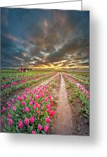 Endless Tulip Field Greeting Card