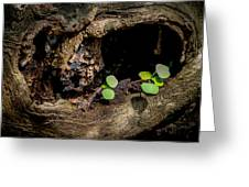 Ends Become Beginnings Greeting Card