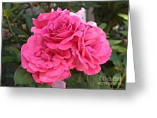 Energizing Pink Roses Greeting Card