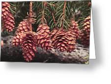 Engelmann Spruce Cones Greeting Card