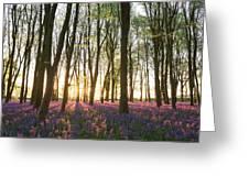English Bluebell Wood Greeting Card