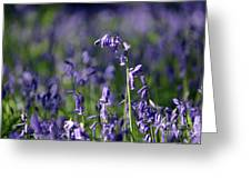 English Bluebells In Bloom Greeting Card