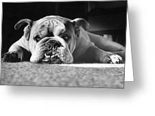English Bulldog Greeting Card