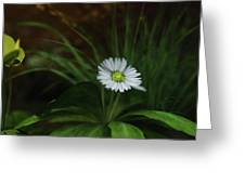 English Daisy Greeting Card