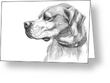 English Pointer Sketch Greeting Card
