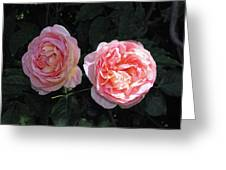 English Rose Pink Abraham Darby  Greeting Card