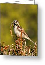 English Sparrow Bringing Material To Build Nest Greeting Card
