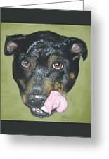 English Staffordshire Bull Terrier  Greeting Card
