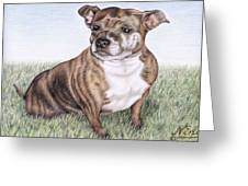 English Staffordshire Terrier Greeting Card