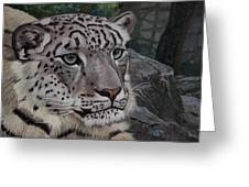 Enif- Snow Leopard Greeting Card