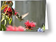 Enjoying The Bee Balm  Greeting Card