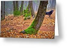 Enjoying The Forest Of Oak Run Greeting Card