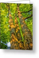 Enlightened Trees Greeting Card