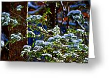Enlightened Winter Greeting Card