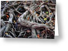 Entanglement Greeting Card by Donna Blackhall