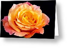 Enticing Beauty The Orange  Rose Greeting Card