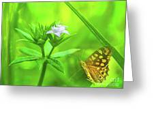 Entre Flors Greeting Card