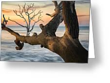 Charleston South Carolina Boneyard Beach Sunrise Scene  Greeting Card