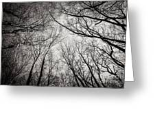 Entwined In The Sky Greeting Card
