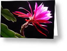 Epiphyllum Greeting Card