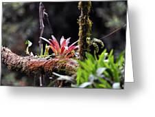 Epiphytic Plants Greeting Card