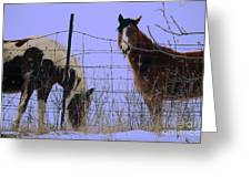 Equestrian Beauties Greeting Card