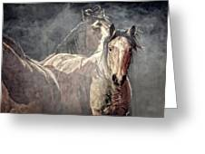 Equine Appearance Greeting Card