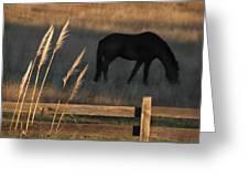 Equine Evening N. California Greeting Card