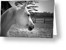 Equine Profile Greeting Card