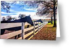 Equine Profiles Greeting Card