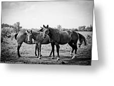 Equine Too. Greeting Card