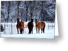 Equine Winter Greeting Card