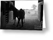 Equus Sapien IIi Greeting Card