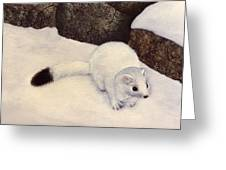 Ermine In Winter Greeting Card