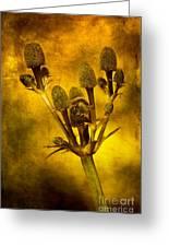 Eryngium Gold Greeting Card