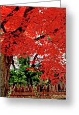 Essence Of Japanese Maple Tree Greeting Card