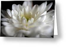 Essential Lightness Of Being Greeting Card