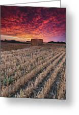 Essex Hay At Sunrise Greeting Card
