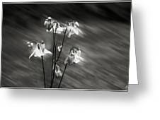Ethereal Columbine Monochrome Greeting Card