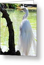 Ethereal Snowy Egret Greeting Card