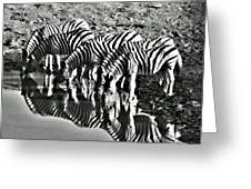 Etosha Pan Reflections Greeting Card