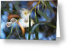 Eucalyphoria Greeting Card