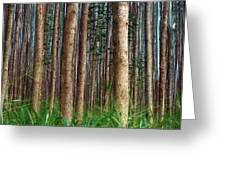 Eucalyptus Forest Greeting Card