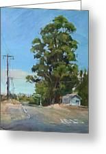 Eucalyptus Tree Near Schellville, Ca Greeting Card